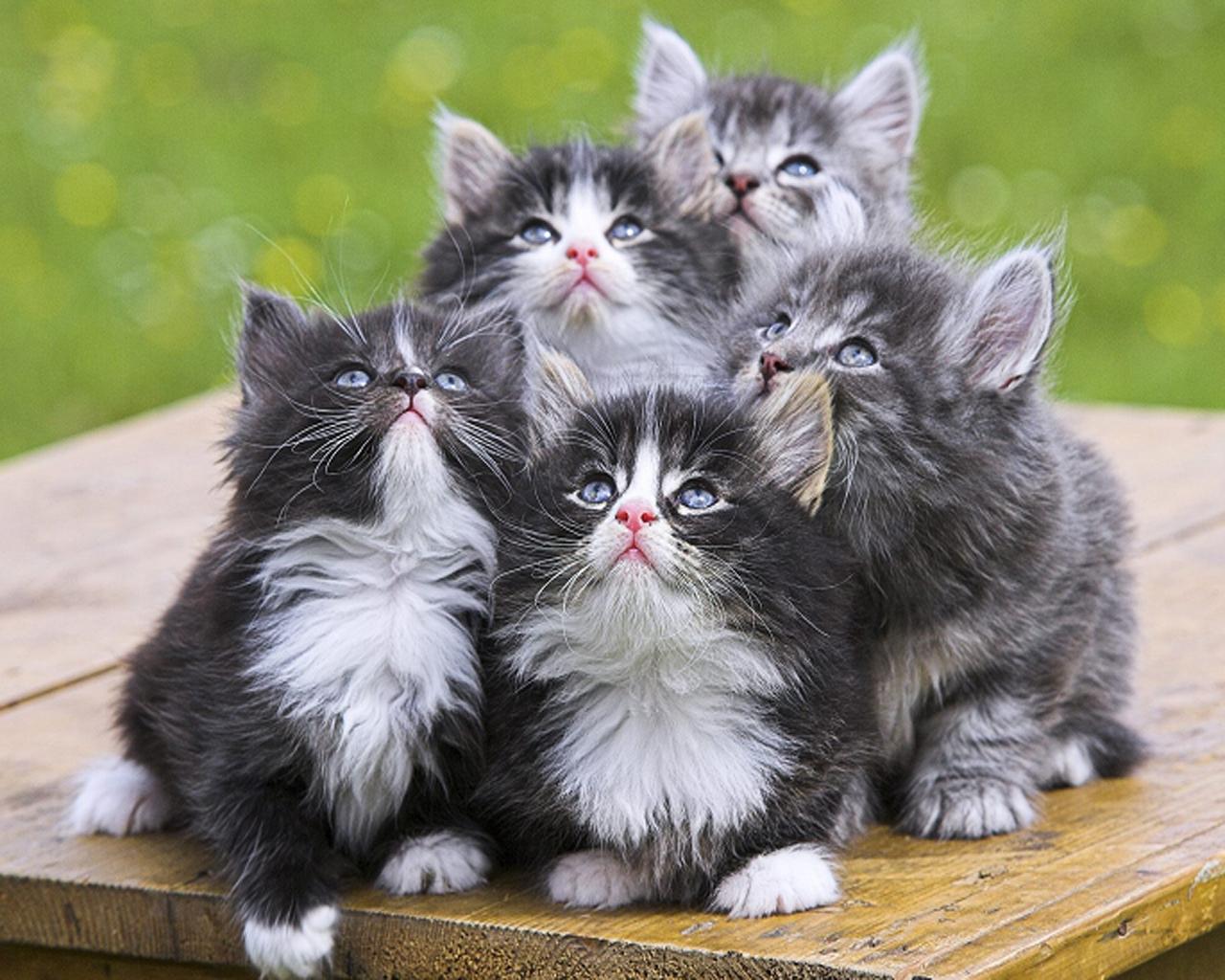 Kucing mempunyai emosi seperti manusia.
