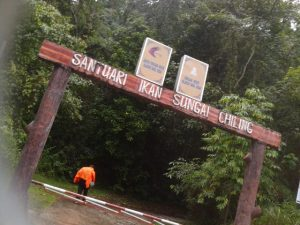 Pintu masuk Santuari Chiling, masuk kedalam trekking mudah selama 5-8minit