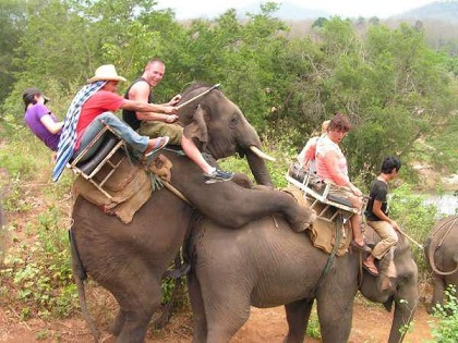 Nothing more awkward than horny elephants during your elephant ride!